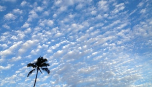 Palm_tree_blue_Maui_sky_and_clouds