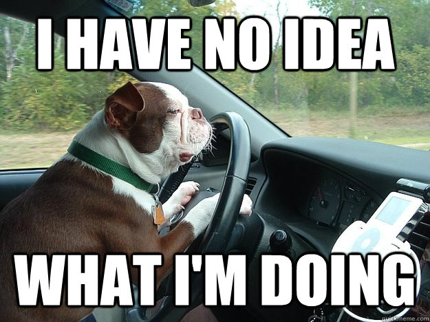 Dog-Driving-Meme